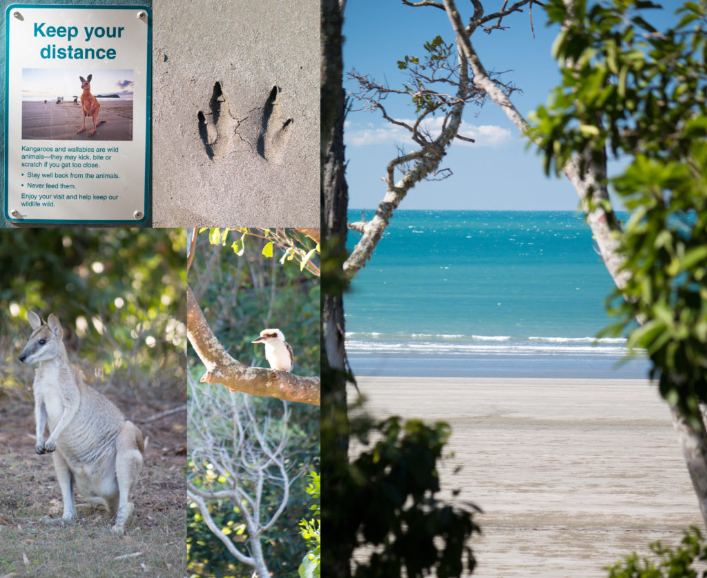 Cape Hillsborough 2